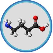 somnafil ingredients Gamma Aminobutyric Acid extract